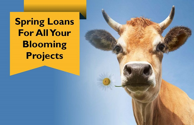 Spring loans for all you blooming projects
